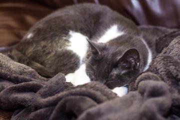close up of a sleepy kitty cat.