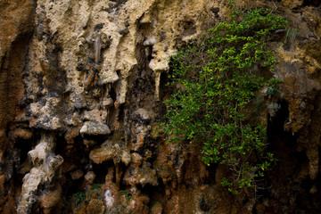 Stalactite from a small cave near the 12 apostles, Victoria Australia.
