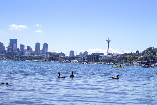 A view of Downtown Seattle from Gasworks park.
