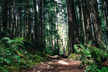 Forest Path on Tiger Mountain in Issaquah, Washington