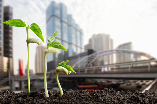 Green sprouts on blurred city background, environmental concept