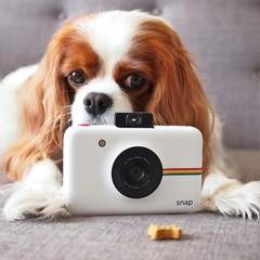 polaroid camera and dog
