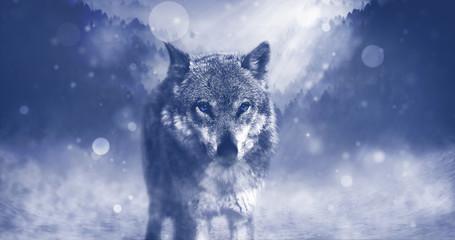 Wolf, wild, wildlife, free, animal