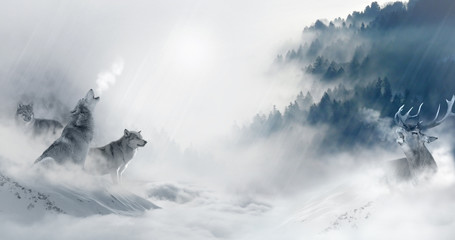 Canvas Prints Wolf Wolf jagt Hirsch