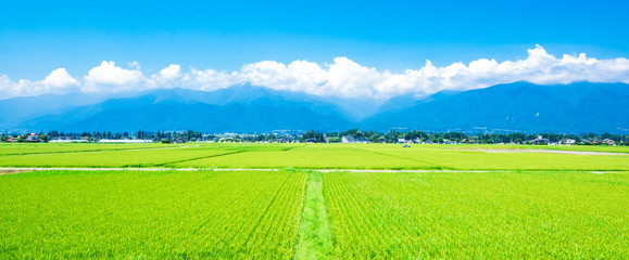 Acrylic Prints Lime green 夏の信州 安曇野の田園風景 ワイド