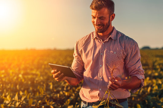 Farmer standing in soybean field looking at tablet at sunset.
