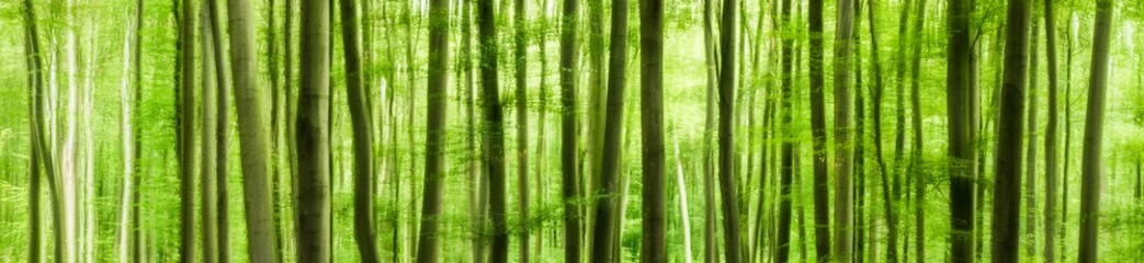 Panoramic background of green forest, abstract soft wallpaper