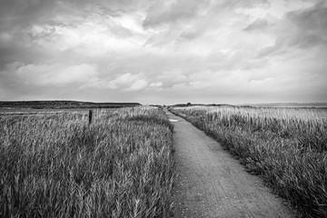 Weg an der Nordseeküste bei Nebel, Insel Amrum