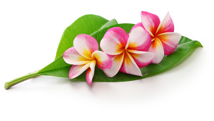 Photo sur Plexiglas Frangipanni plumeria flowers and leaves isolated on white background