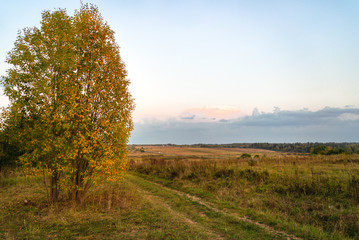 Fotobehang Platteland Fall landscape of a field, road, and lonely tree