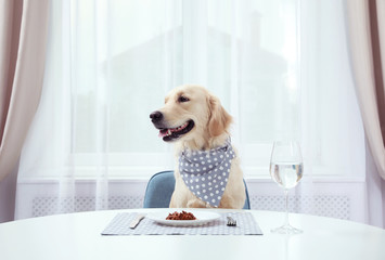 Labrador Retriever with scarf sitting at dining table