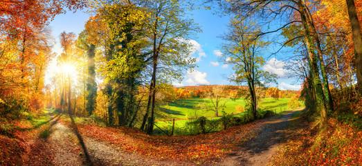 Aluminium Prints Autumn Gorgeous colorful panoramic landscape in autumn