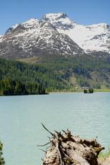 Poster de jardin Parc Naturel Blick über Silsersee auf Isola Piz da la Margna