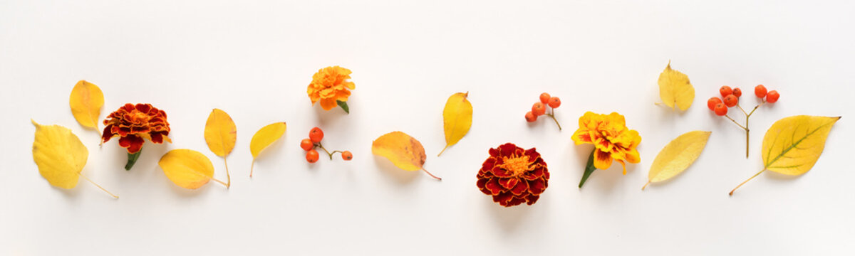 Autumnal leaves and flowers