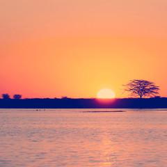 Photo sur Aluminium Corail Botswana Sunset