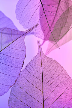 Tender leaves with veined pattern on a pink background. Close-up view. Decoration background for layout. Top view