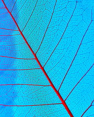 Macro photo of the smallest veines of organic leaf on a blue background. Natural pattern for layout.