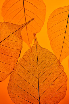 Close-up photo of tender leaves with veined pattern on an orange background. Top view.