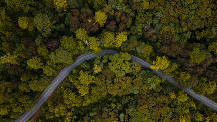 Curvy road in the forest