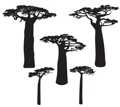Set of black baobab tree silhouettes
