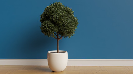 Tall boxwood plant