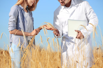 Agronomist with farmer in wheat field, closeup. Cereal grain crop Wall mural