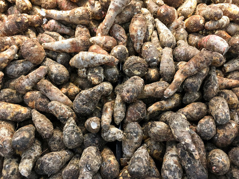 A lot of yucca roots on sale at farms market