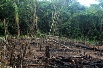 Deforestation of the Amazon rainforest, through slash-and-burn