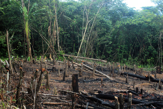 Deforestation of the Amazon rainforest, through slash-and-burn