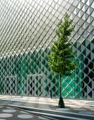 Stadtbaum vor der Glasfassade des Futurium in Berlin