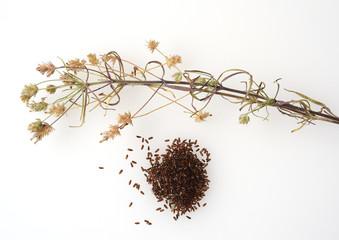Schwarzer, Flohsamen, afra, Plantago