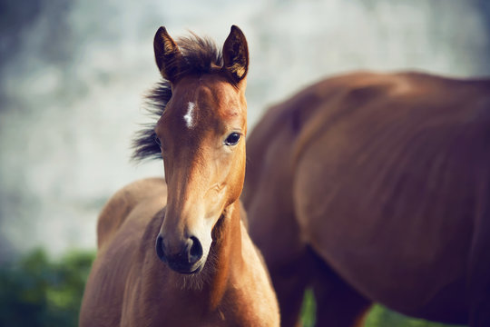 Portrait of a cute shy foal standing near his mother on a summer day