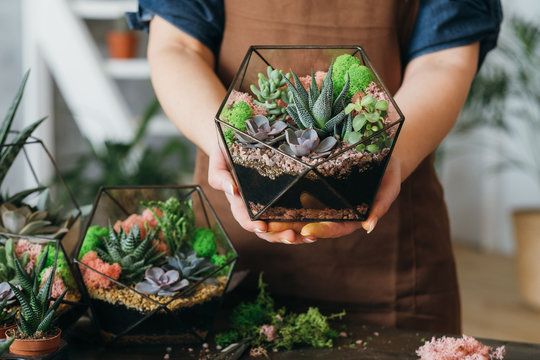 DIY florarium. Creative gift delivery service. Cropped shot of woman holding glass geometric vase with growing succulents.
