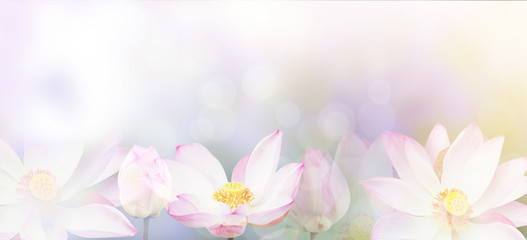 Stores photo Nénuphars banner pink water lily flower background.