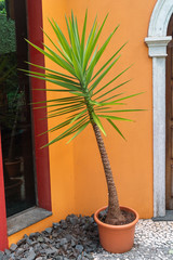 palm plant in pot