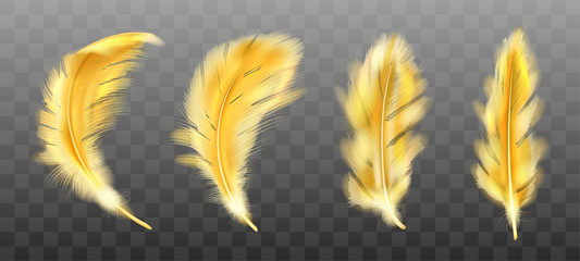 Golden yellow fluffy feather vector realistic set isolated on transparent background. Gold feathers from wings of birds or angel, symbol of softness and purity, design element