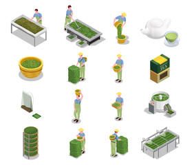 Tea Production Steps Isometric Icons