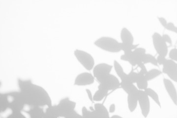 Overlay effect for photos and mockups. Gray shadow of the wild roses leaves on a white wall. Abstract neutral nature concept blurred background. Space for text.