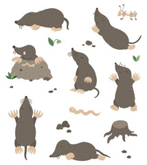 Vector set of cartoon style flat funny moles in different poses with ant, worm, leaves, stones clip art. Cute illustration of woodland animals for children's design. .