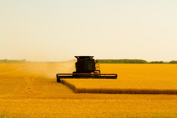 Canadian Farmer harvesting field on a combine harvester in Winnipeg Manitoba Fototapete