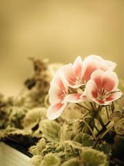 Pink white purple flowers in pot