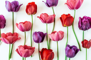 Floral composition with colorful tulip flowers on white background. Flat lay, top view florist blog...