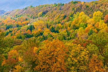Poster de jardin Parc Naturel The colors of autumn in the Trevigiani hills