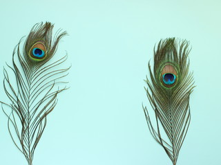 Photo sur Toile Paon Clothing and home decoration. Beautiful peacock feathers on light blue background.