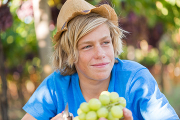 Boy in hat and blue t-shirt harvesting ripe grapes