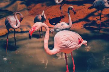 In de dag Flamingo flamingo in water