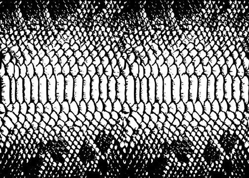 texture pattern black white snake crocodile reptile seamless repeat. Print