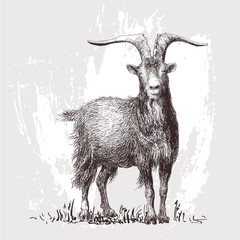 Mountain goat. Vector illustration