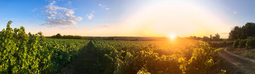 Couché de soleil dans les vigne en Anjou