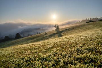 Fototapete - Sonnenaufgang im Schwarzwald